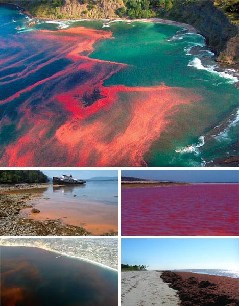 4) Red Tides