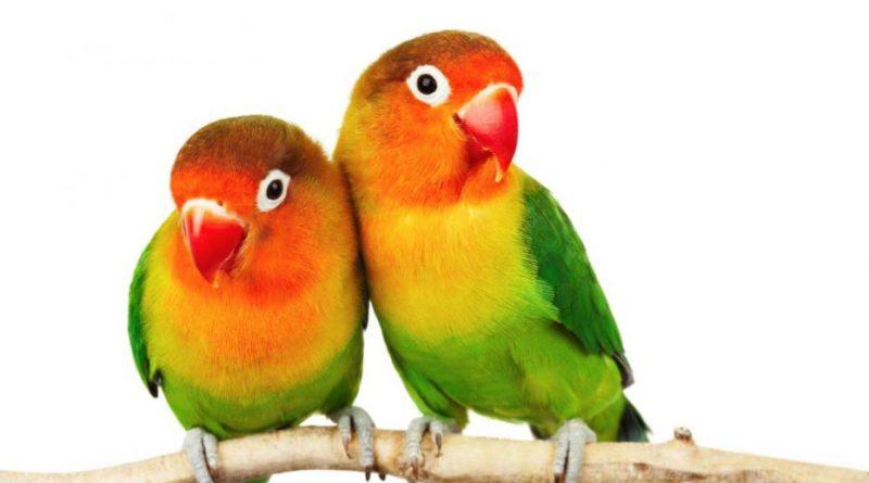 Antara Burung Sehat & Burung Cacat
