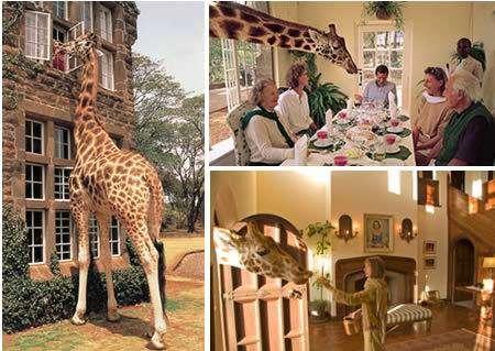 Giraffe-Manor.jpg (450×319)