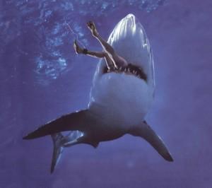 ikan-hiu